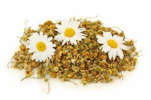 Những bài thuốc về câu đằng, cúc hoa có tác dụng hạ áp