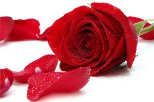 Phương pháp làm đẹp và điều trị bệnh từ hoa hồng