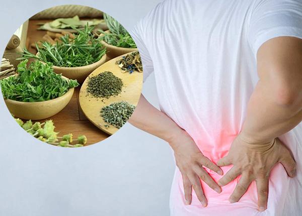 Bài thuốc nam chữa bệnh đau lưng hiệu quả và rất an toàn