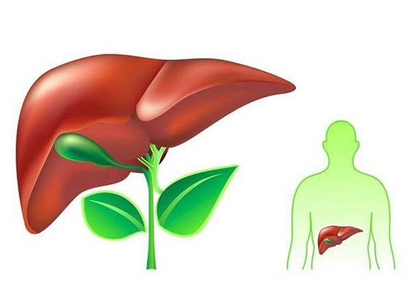 Cơ thể sẽ được thanh lọc từ bên trong nhờ những cây thuốc nam quen thuộc