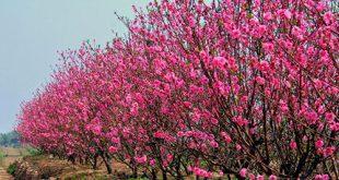 Tiết lộ tác dụng chữa bệnh của những loại cây cảnh quanh nhà