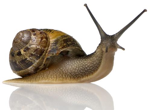 Một kho dinh dưỡng có trong ốc sên