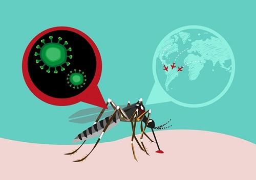 Nguyên nhân, triệu chứng bệnh virus Zika