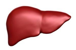Cây chó đẻ có tác dụng chữa bệnh ở gan với nhiều công dụng khác nhau