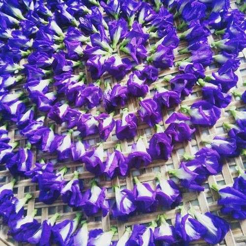Công dụng của hoa đậu biếc đối với sức khỏe là gì?