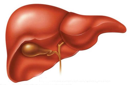 Vị thuốc quý có tác dụng giải độc gan bổ thận?